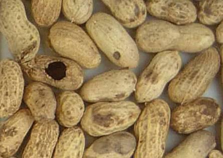 гнилой арахис
