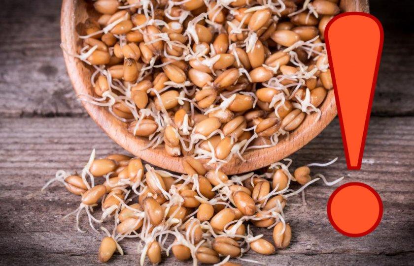 вред пророщенного зерна