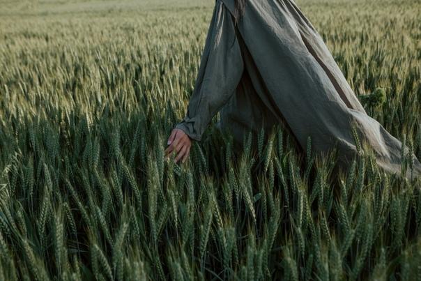 зерно в поле