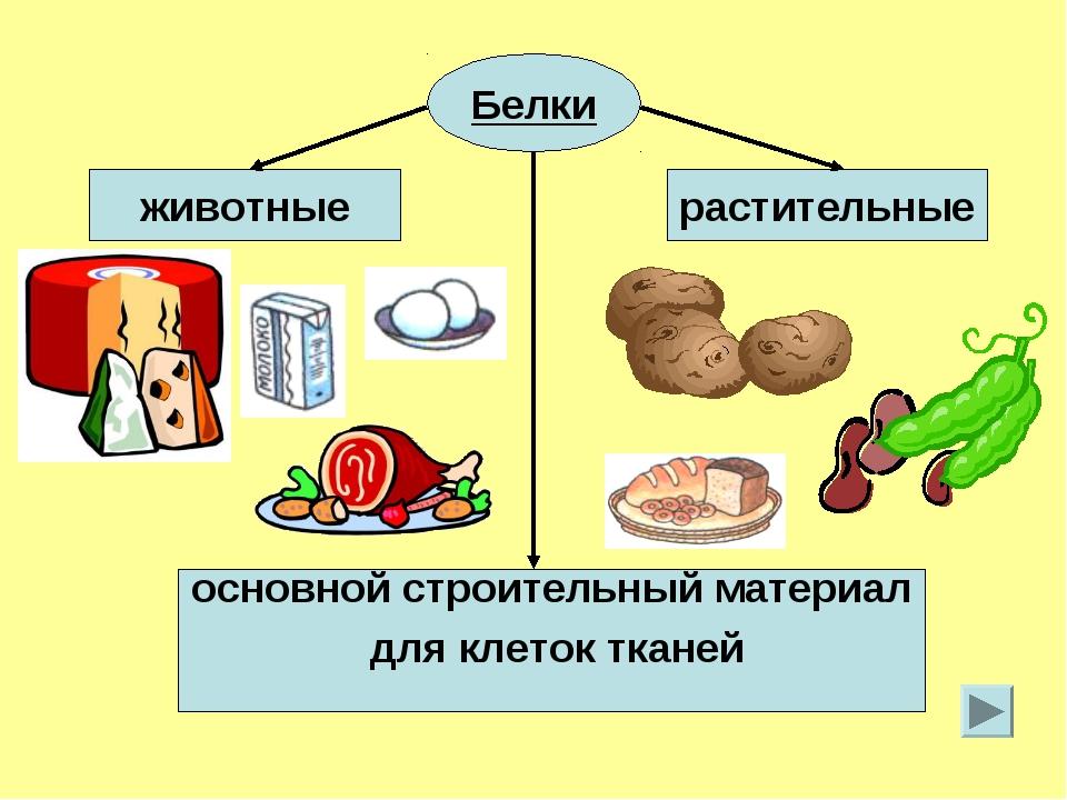 животные и растительные белки
