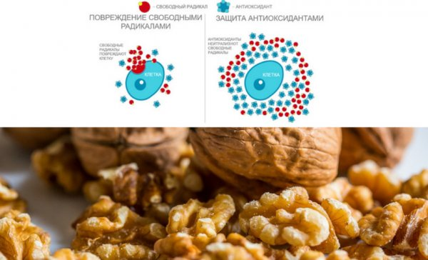 грецкий орех против онкологии