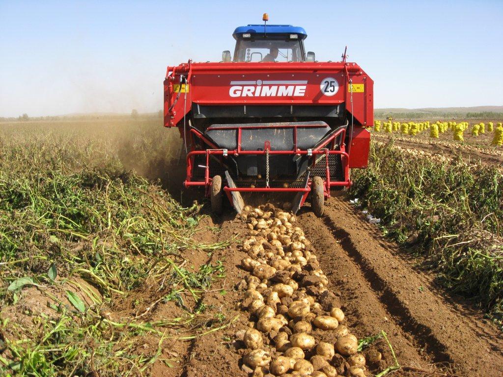 польза картошки