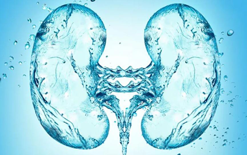 вода для почек человека